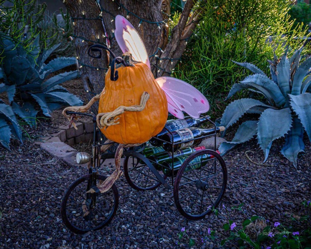 2019 10 24 Pumpkin Garden 4923 Web