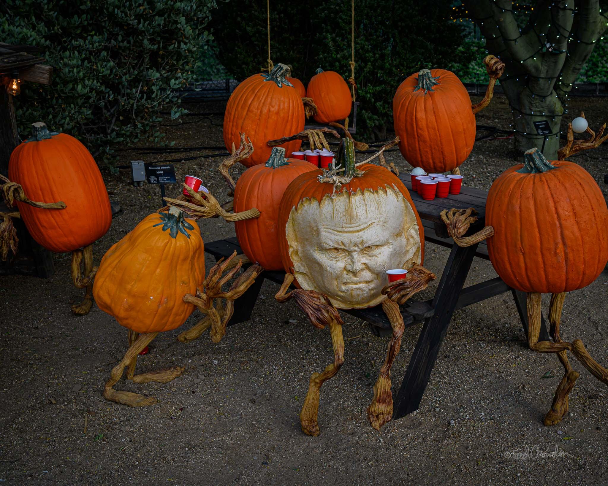 2019 10 24 Pumpkin Garden 4983 Web