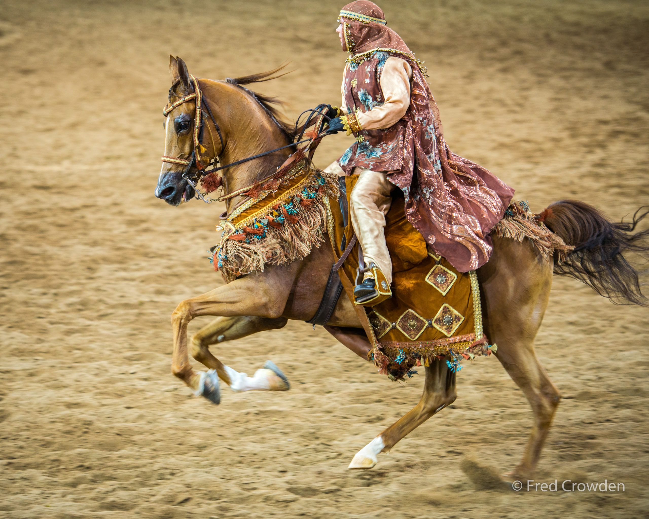 2016 02 13 Scottsdale Arabians 4027_ Big