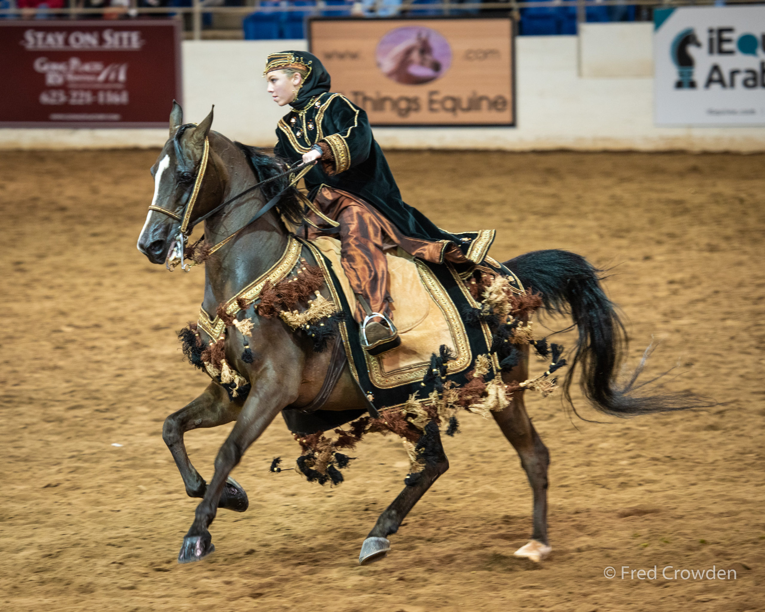 2019 02 16 Scottsdale Arabians 9037 Big